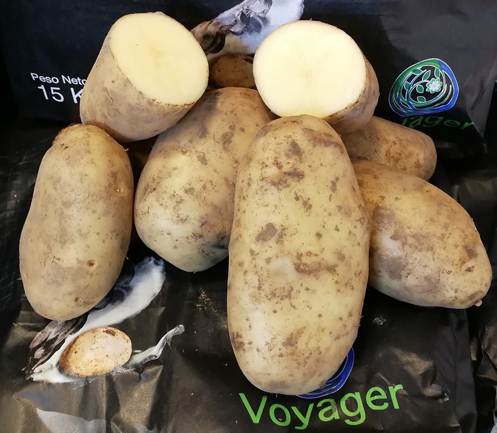 La patata voyager una misma patata para cocer y fre r - Tiempo para cocer patatas ...
